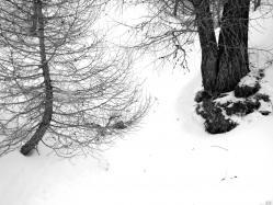 neige-2-a-1.jpeg