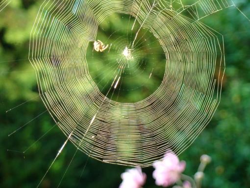 araignée2reduc